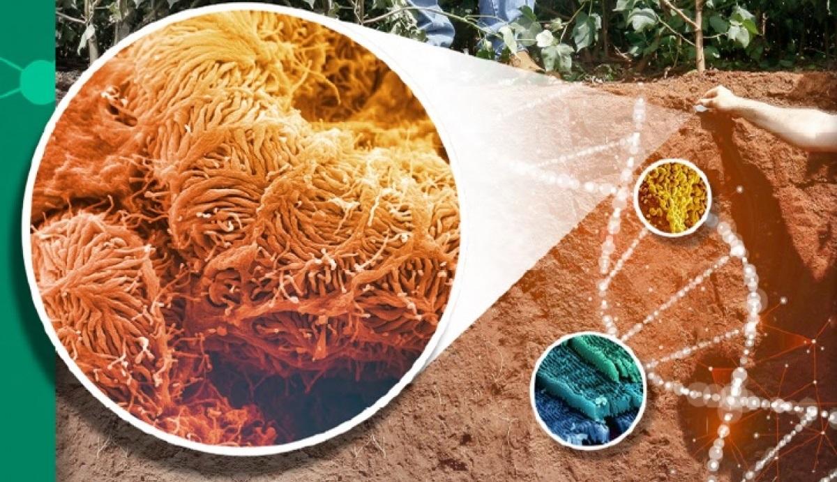 Qualidade das argilas e soluções em bioinsumos para agricultura sustentável